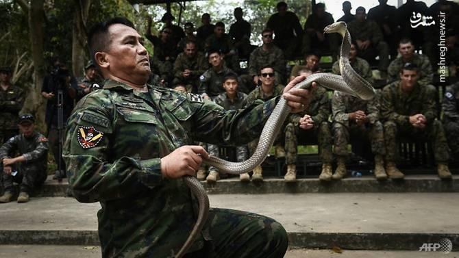 هفت گذرگاه عکس/تمرین نظامی با مار کبری - |مرجع آخرین اخبار نظامی ...