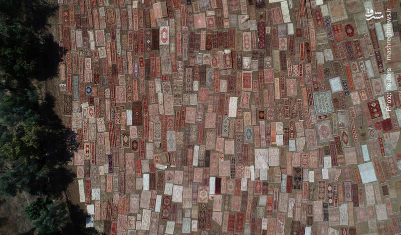 پهنکردن فرش در آفتاب برای تثبیت رنگ آن در آنتالیا